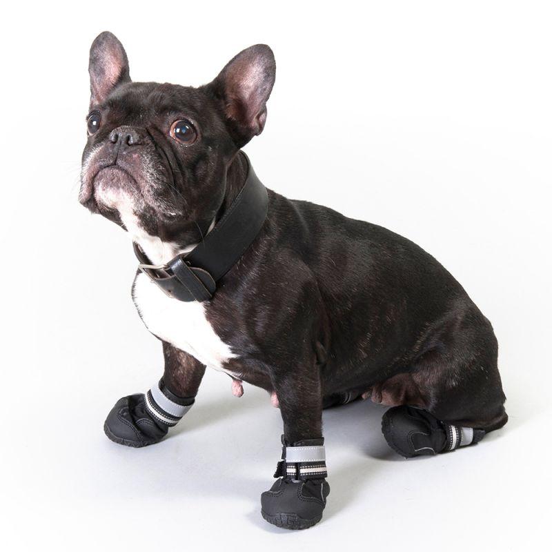 scarpe per cani adidas